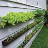 Vertical Garden?  Sure, why not?!