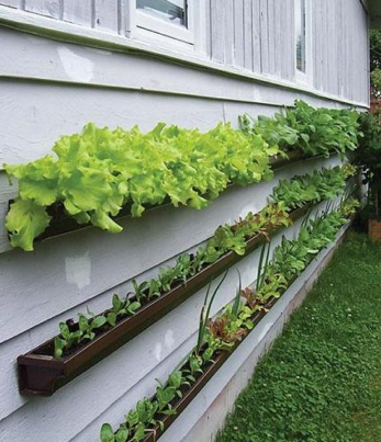 Vertical Garden?  Sure, why not?!
