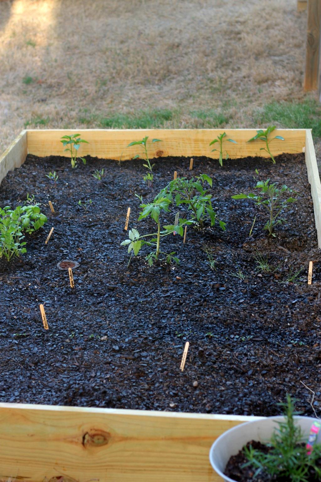 Organic Choice Garden