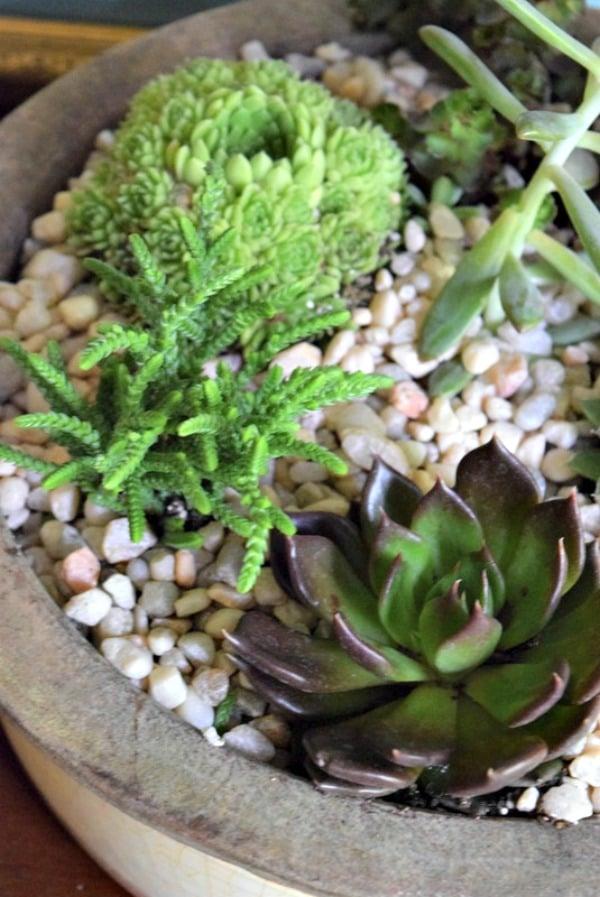 succulent_garden_diy_miss_information