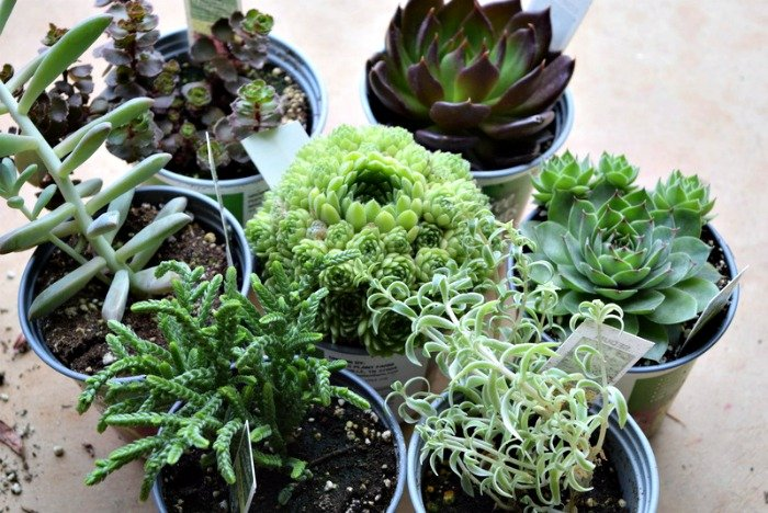 succulent_garden_miss_information